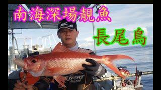 【香港釣魚】《南海深場~長尾鳥》