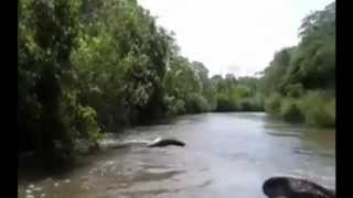 Fischer provozieren Riesen-Anakonda