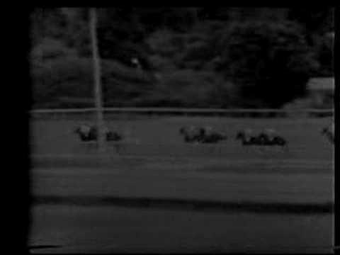 Clasico Jose Antonio Paez 1972