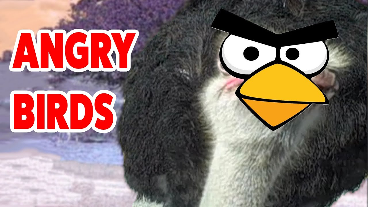 Angry Birds In Real Life Video Compilation | Cutest Animals 2016