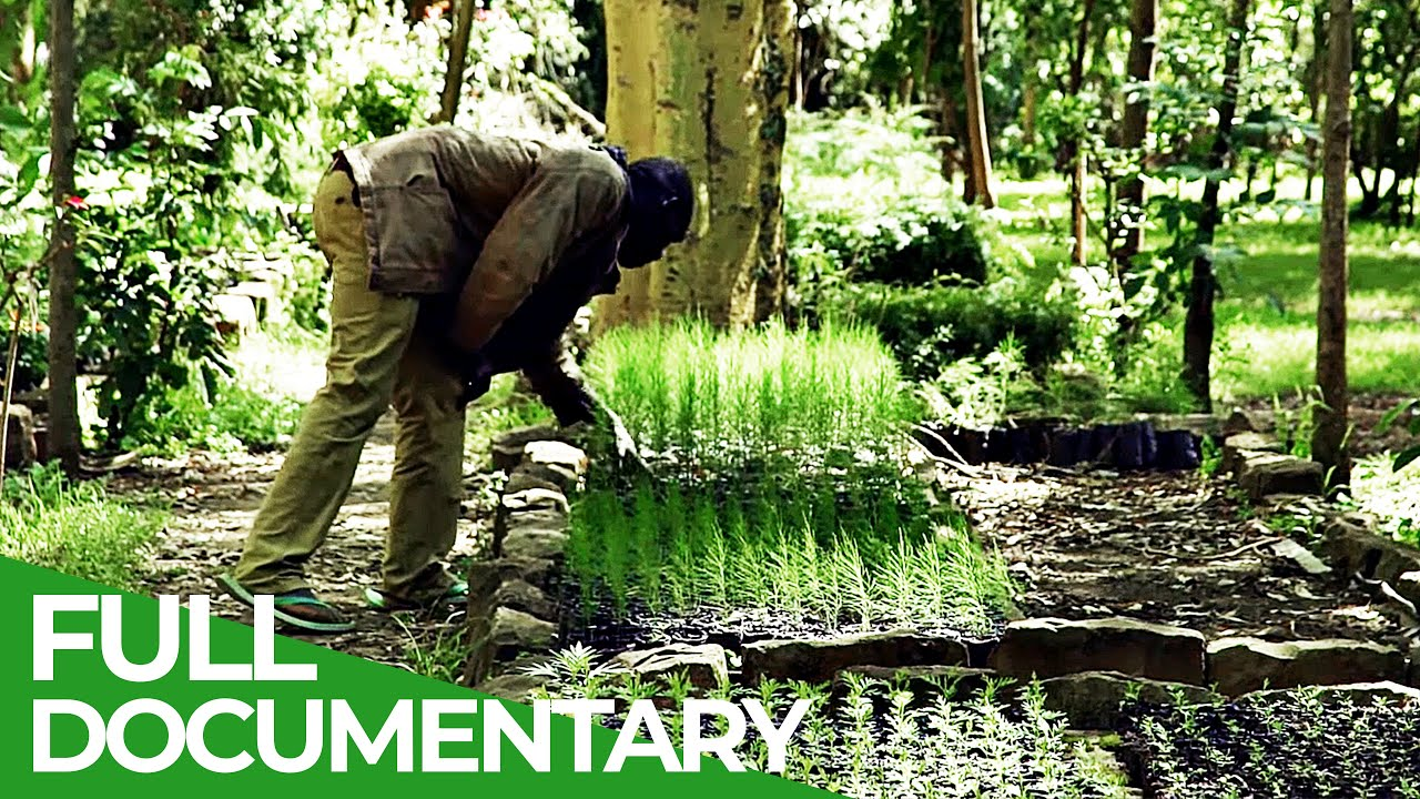 Re-Growing Kenya's Forests | Giving Nature A Voice | Free Documentary Nature