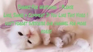 adorable kittens and cute puppies compilations 2016