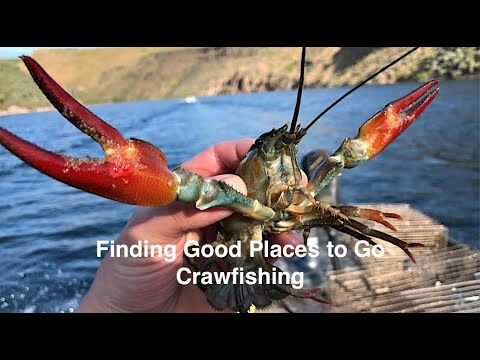 Crawfishing Hack #2 - Finding Good Places To Catch Crayfish And Mudbugs