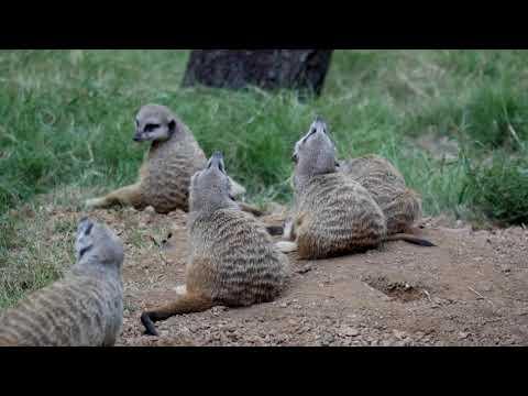 Weekend Wild - Houston Zoo