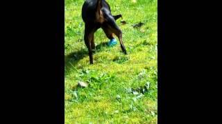 Min Pin Easter Egg Hunt