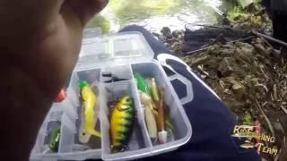 Pêche de la truite et de la perche en rivière  cuillers et vers de terre (petit concour)[HD]