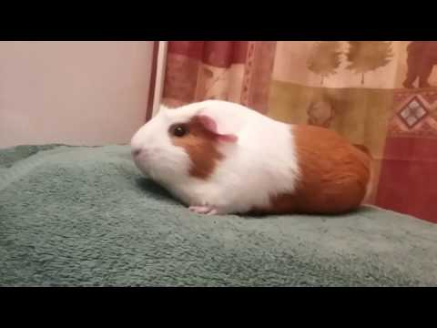 Cleaning Patches stomach and bum