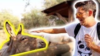 Paura con gli animali selvaggi e rettili allo zoo! • Cover e maglie...