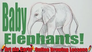 DRAWING a BABY Elephant