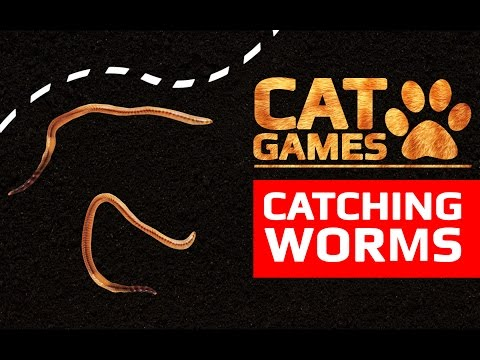 CAT GAMES  CATCHING WORMS ENTERTAINMENT VIDEOS FOR CATS TO WATCH