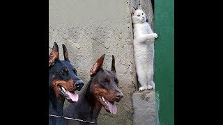 Video Funny Cats Compilation [Most See] Funny Cat Videos Ever Part 2 download MP3, 3GP, MP4, WEBM, AVI, FLV April 2018