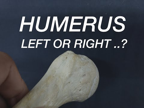 HUMERUS - SIDE DETERMINATION