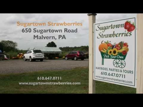2014 Chester County (PA) Farmer of the Year - Robert Lange of Sugartown Strawberries