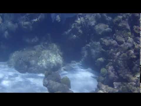 Triggerfish on Horseshoe reef November 1, 2017