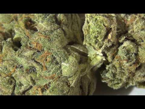 Gorilla Glue #4 Kabunky Cultivation from Nevada Medical Marijuana