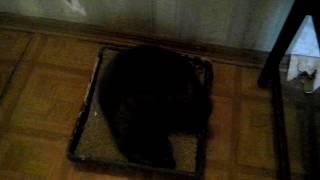 Кошке поменяли наполнитель для туалета
