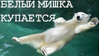 Download Белый мишка купается Mp3 and Videos