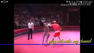 funny fight animals 1mine watch