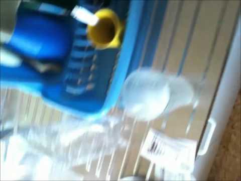 fabriquer du co2 artisanal pour plantes d aquarium