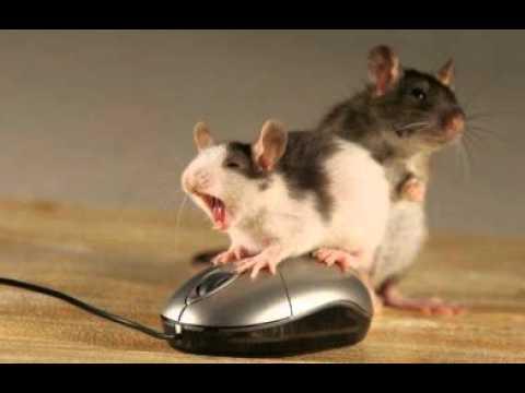 Mäuse Lustig