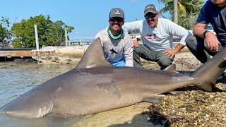 Dock Fishing for GIANT Bull Sharks