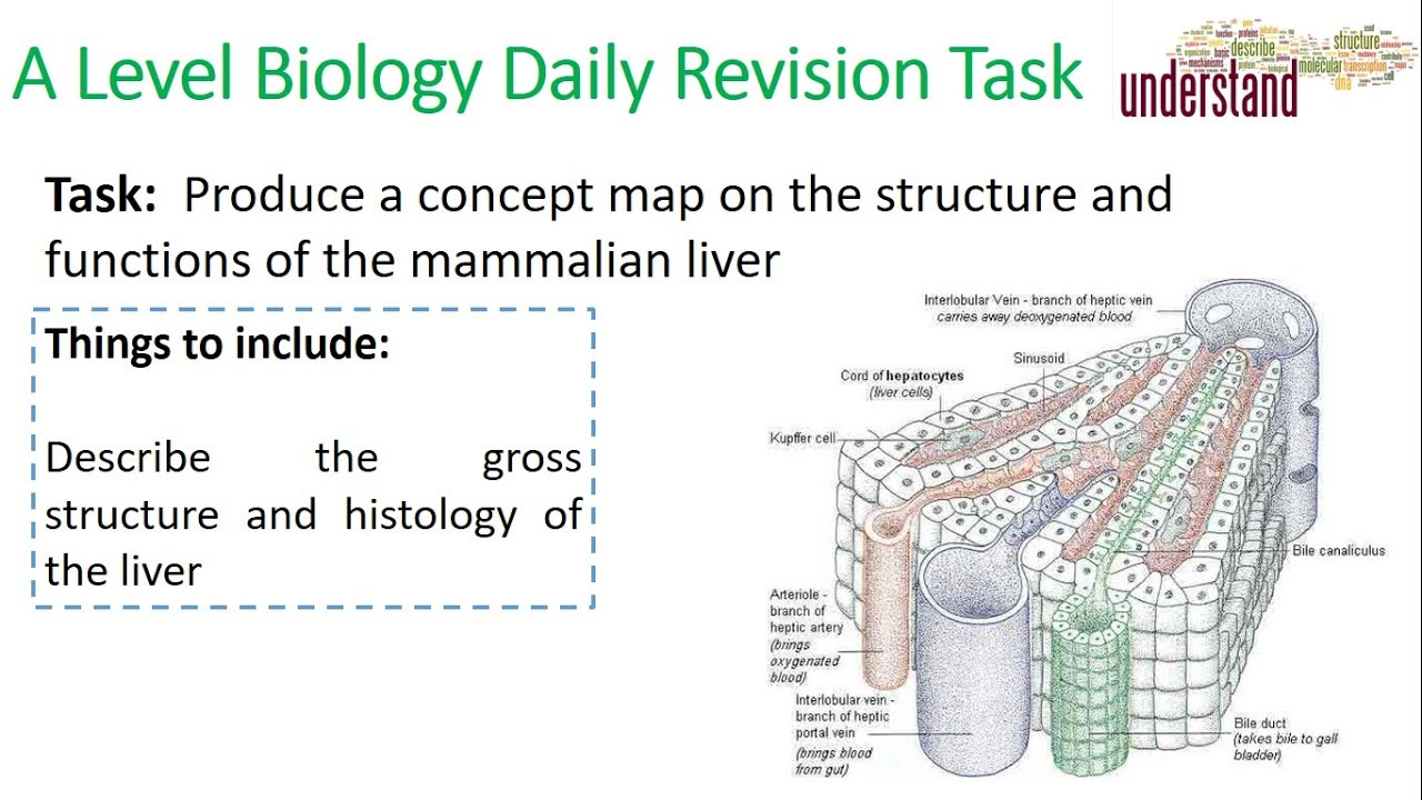 A2 Biology Revision Task 6 The Structure And Functions Of The