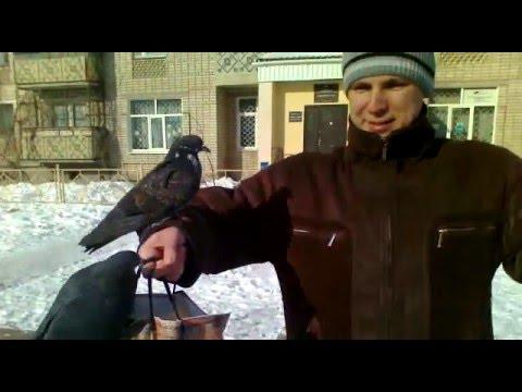 когда лучше глистить голубей зимой