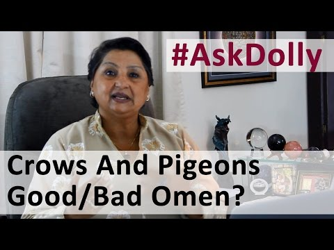 Ask Dolly: Do Crows And Pigeons In Neighborhood Signify Good/Bad Omen?