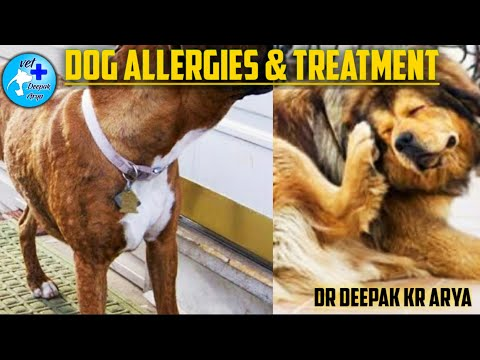 Dogs Allergies and their reaction