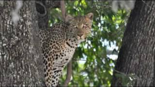 vuclip Botswana Safari 2009