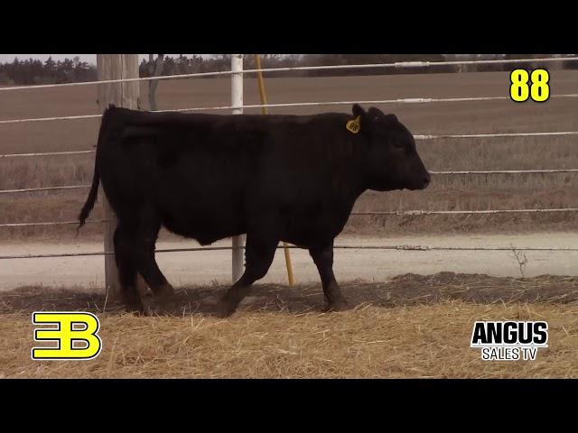 Benoit Angus Lot 88