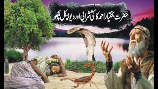 Hazrat Khwaja Bakhtiyar Kaki  Aur Bicho /हज़रत बख्तियार अहमद काकी शरबी और बिचो/stories of khwaja