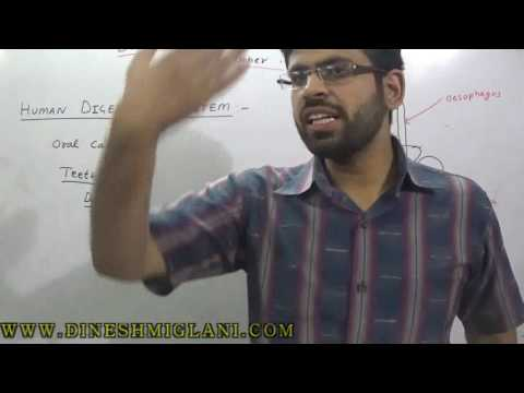 HUMAN DIGESTIVE SYSTEM GENERAL SCIENCE SESSION 6   FOR SSC CGL CHSL GOVERNMENT JOB CLAT