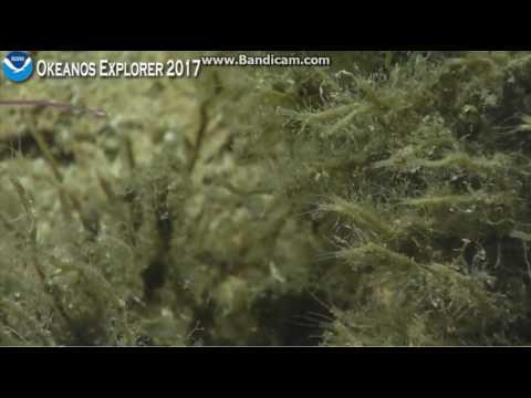 Okeanos Dive 5 Jarvis Island