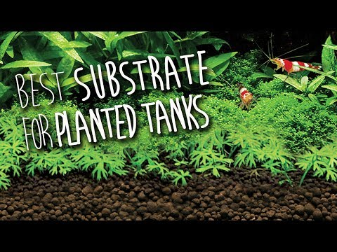 Fluval Stratum | Substrate for Planted Aquariums