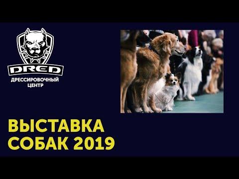 Выставка собак всех пород 2019 в Киеве