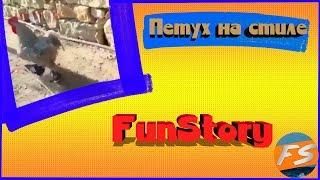Петух на стиле (^o^)   Приколы   FunStory #3 Угарные приколы