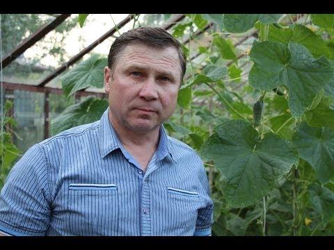 ОГУРЦЫ. 3 способа вертикального выращивания плети в теплице
