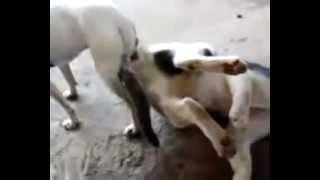 Increible Perro Y Gata Se Aparean