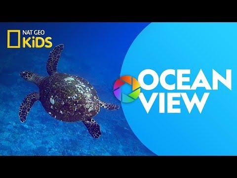 Ocean View | Ready, Set, Zoom!