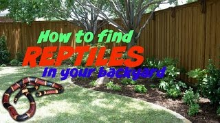 How To Find Reptiles In Your Backyard!