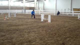 Border Terrier Akc Trial-jumpers