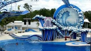 Sea World, Orlando. Шоу дельфинов и китов. 6