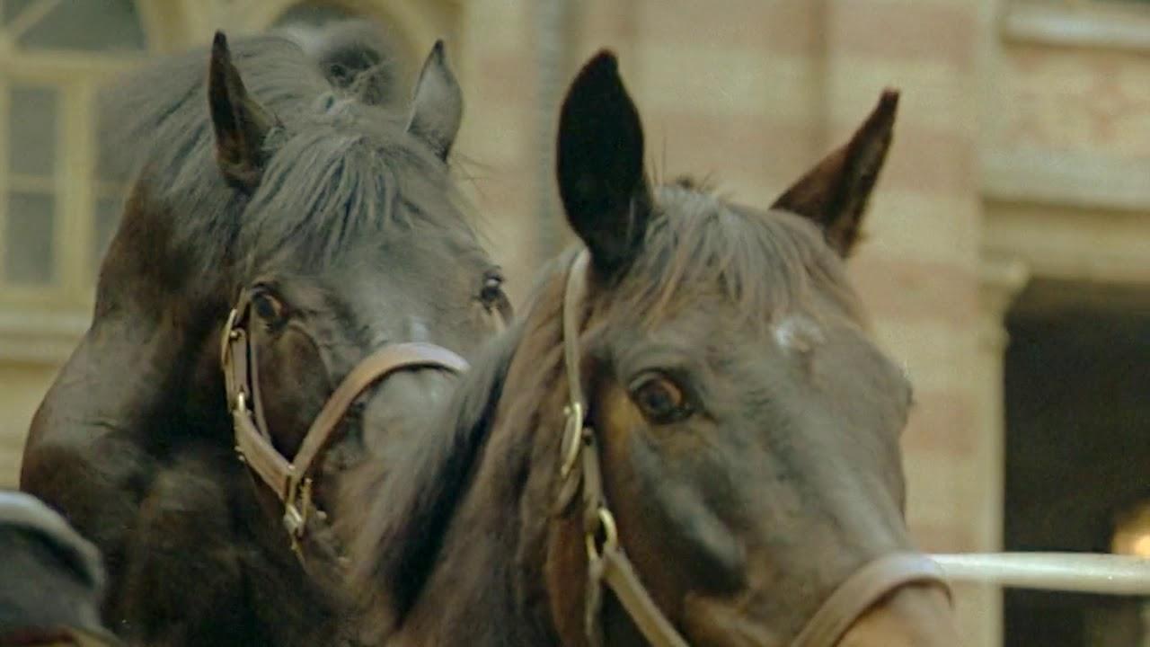Horses mating up close and deep