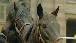 horse mating up close
