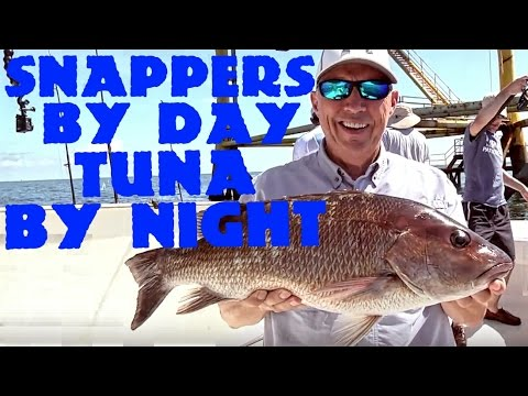 Offshore Fishing for Mangrove Snapper and Yellow Fin Tuna