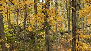 Come hiking at sleepy giant state park with us