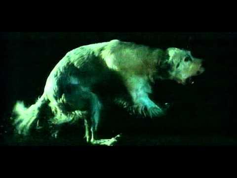 Белый Бим Черное ухо (1976) | Официальный русский трейлер | HD