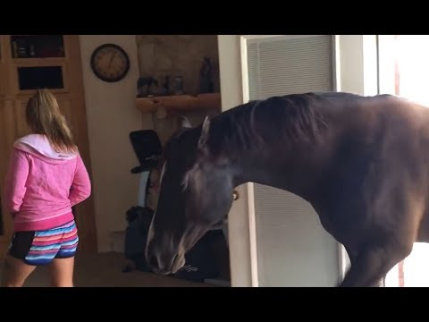 Horse Walks Inside House To Chill With Owner