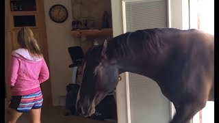Download lagu Horse Walks Inside House to Chill With Owner MP3